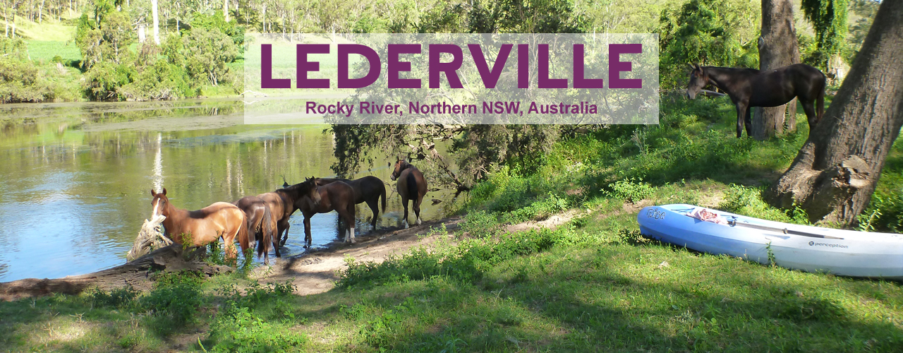 Horses of Lederville Farm